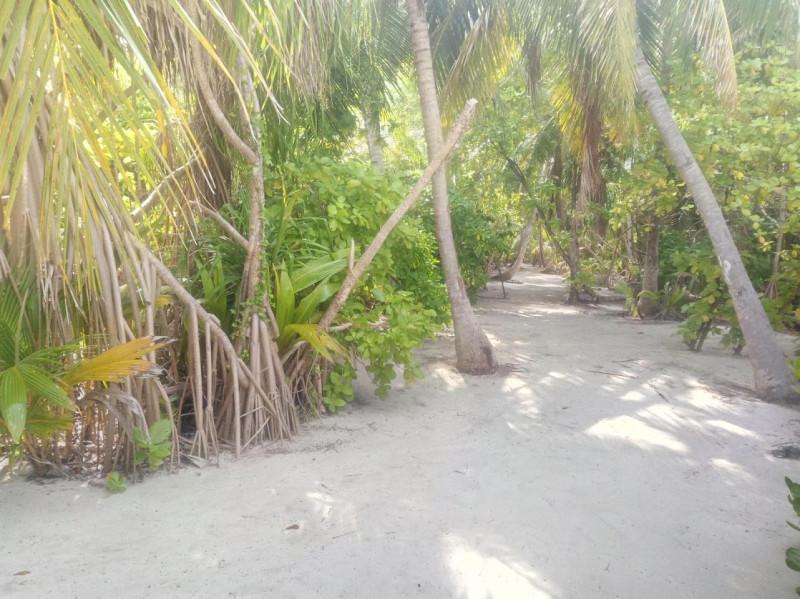 Тропинка на острове