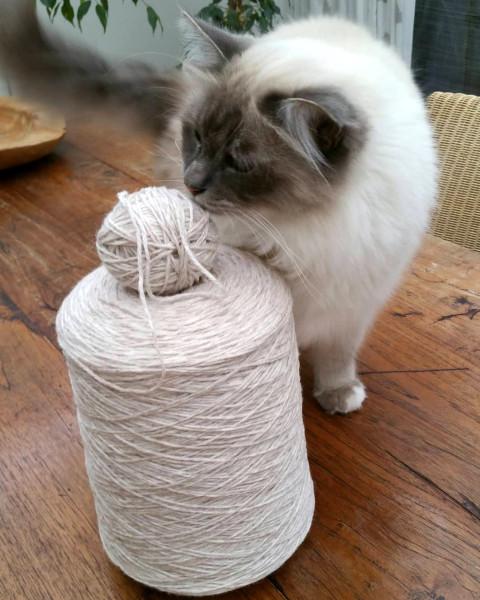Yani and wool.jpg