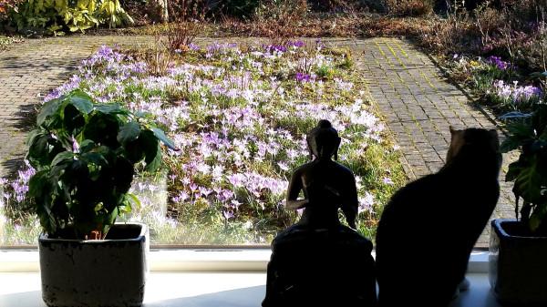Lapka wathcing our front garden