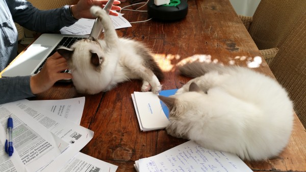 joint help with grant writing.jpg
