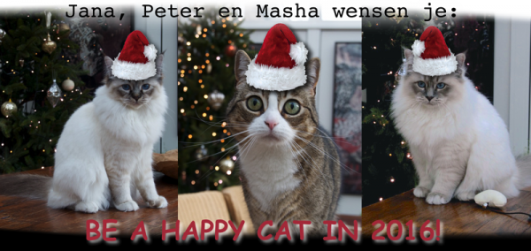 cats happy NY 2015.jpg