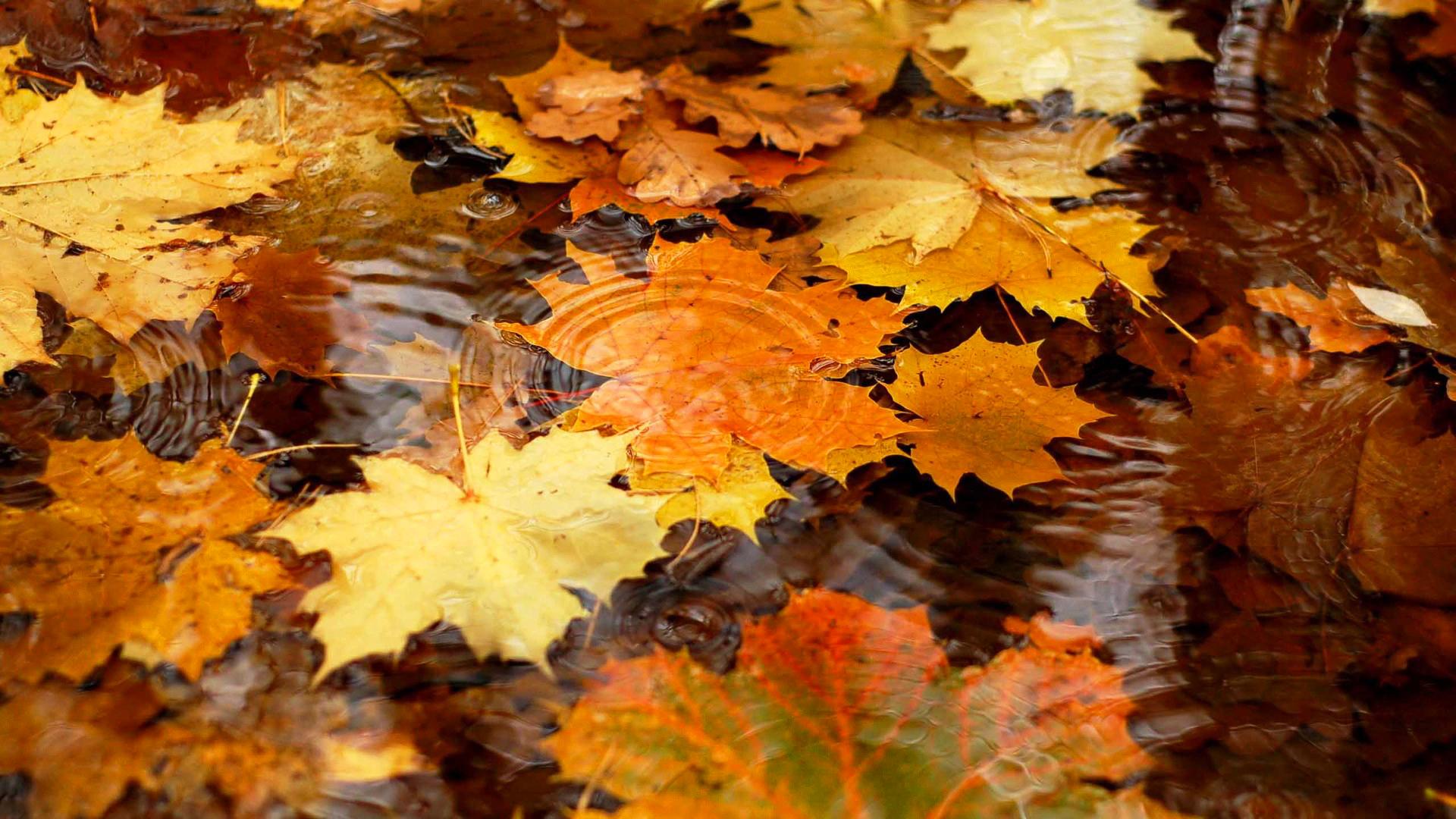 красивые-картинки-осень-Природа-1358039