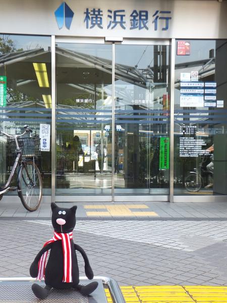 кот у банка