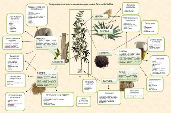 Целлюлоза из конопли технология чай на марихуане
