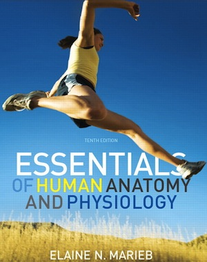 essentials human anatomy and physiology