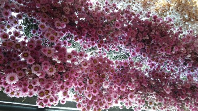 20140805_Flower Market