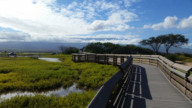 20150617_Boardwalk through Birdland.jpg