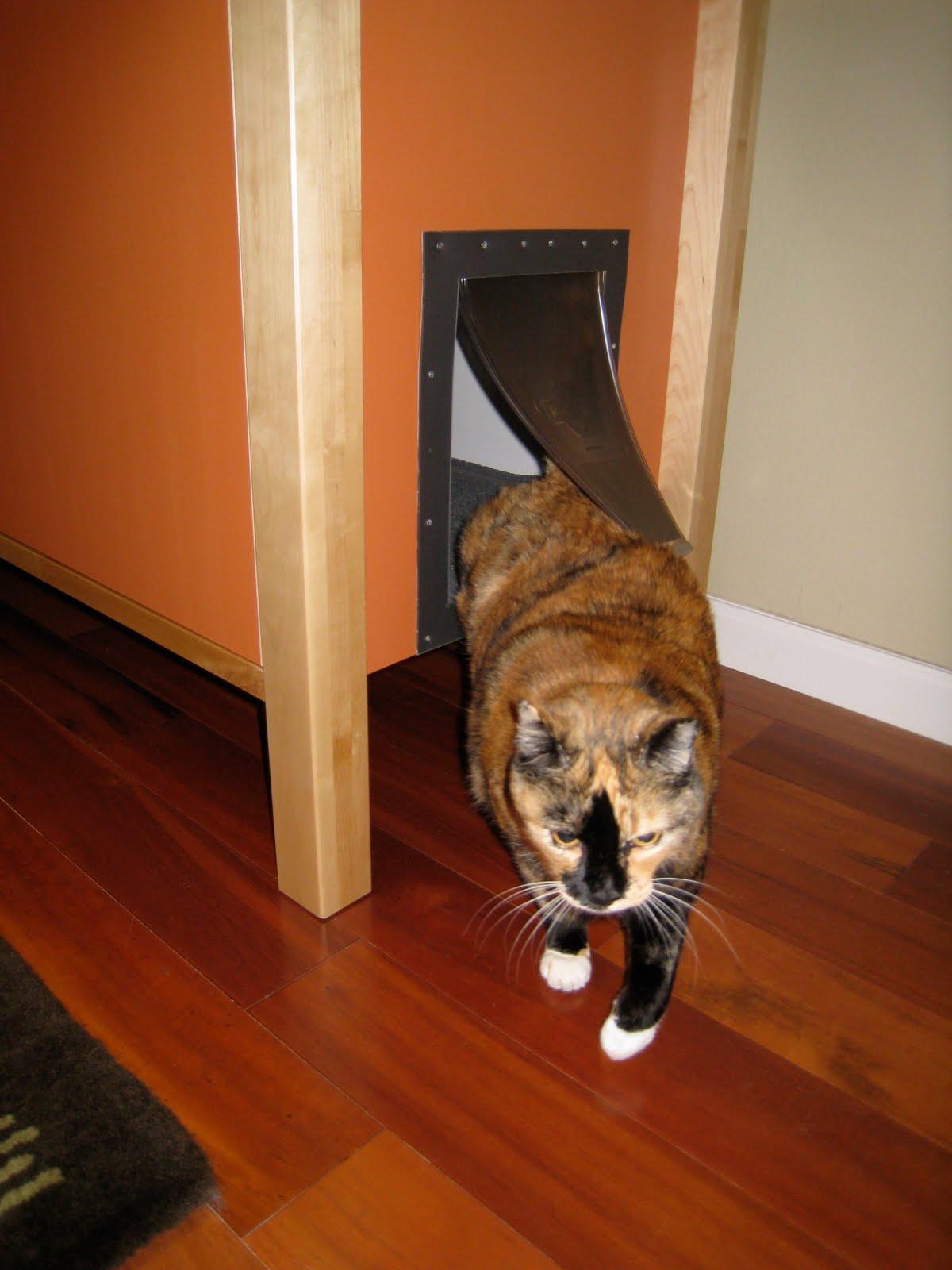 Как сделать в двери проход для кошки своими руками