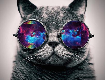 space glasses cat