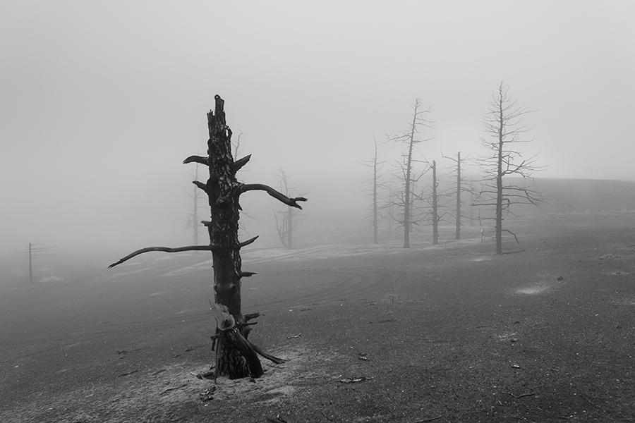 Сказки мёртвого леса.