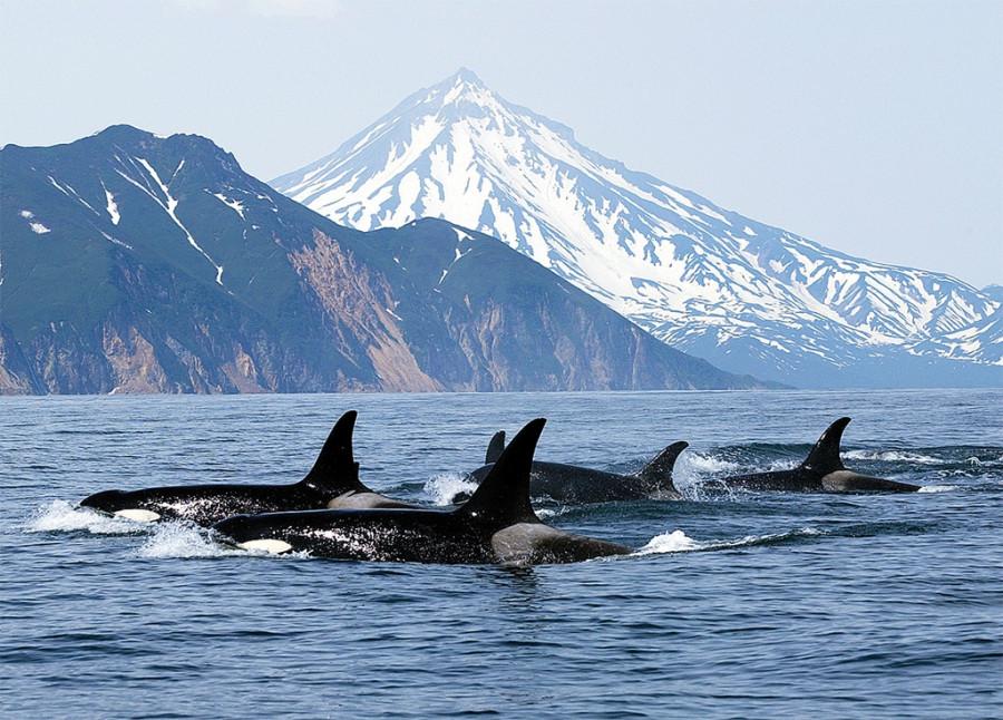 VIM_Display_Whales