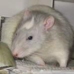 Krümel 2.12.2006 - 18.12.2008