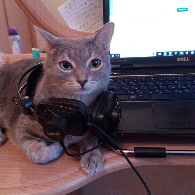 cat, василизм, утро