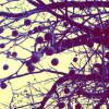 meatball tree.jpg