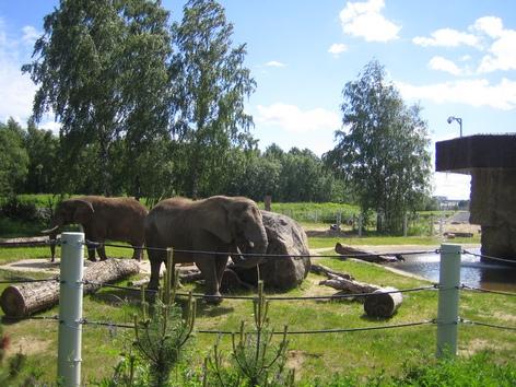 Tallin zoo