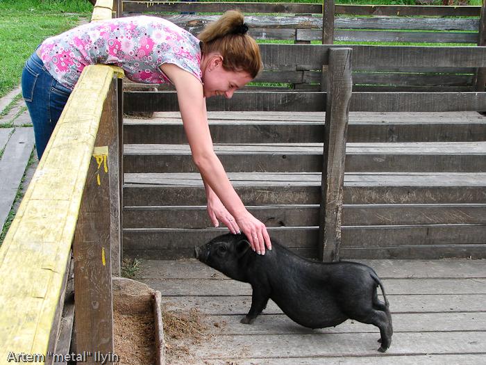 Вьетнамские свиньи, Киевская область, Ясногородка, страусиная ферма, мини-зоопарк