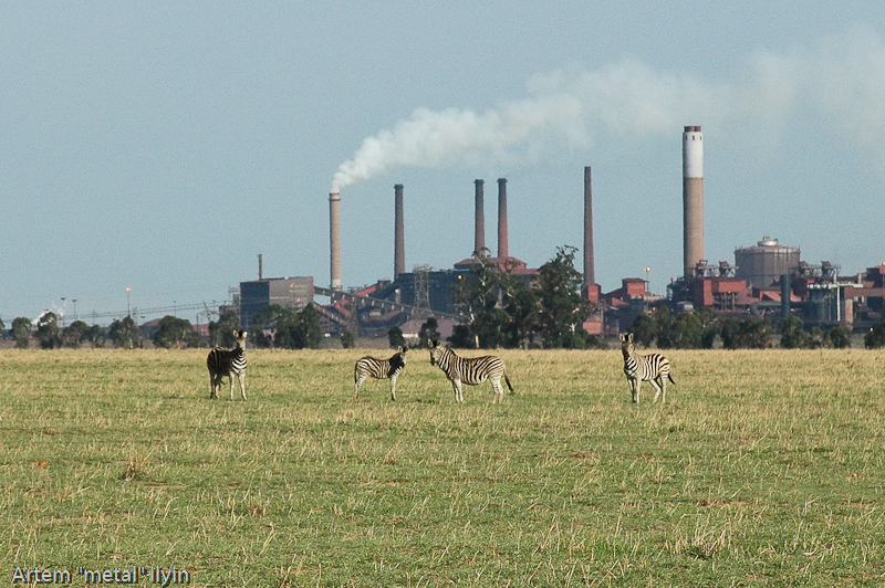 Зебра. Природный заповедник Ferroland возле завода Vanderbijlpark Mittal Steel South Africa Южная Африка