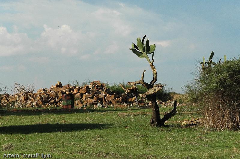 Кактус. Природный заповедник Ferroland возле завода Vanderbijlpark Mittal Steel South Africa Южная Африка