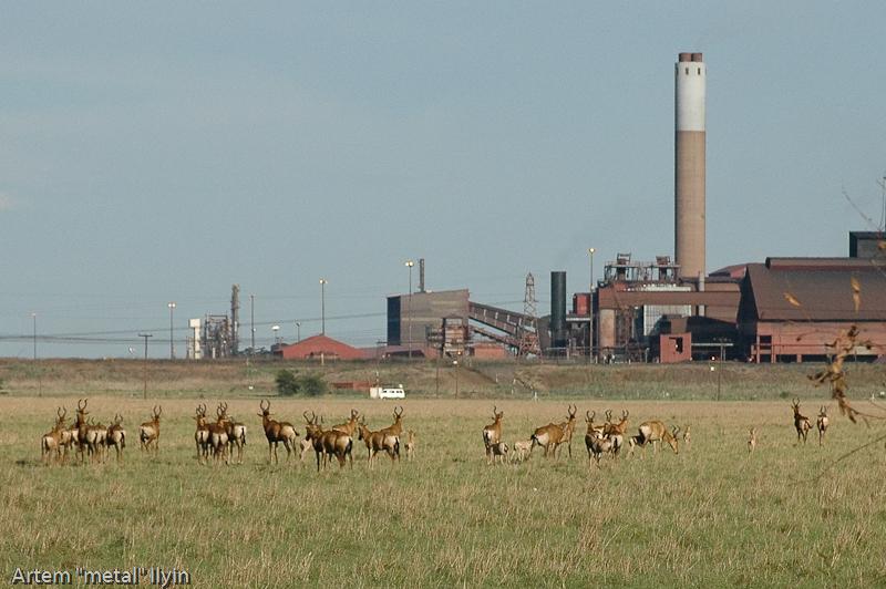 Импала. Природный заповедник Ferroland возле завода  Vanderbijlpark Mittal Steel South Africa Южная Африка