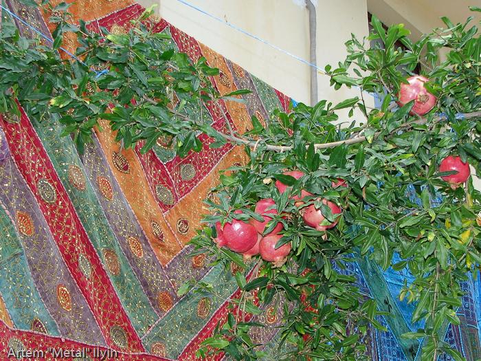 Гранатовое дерево в Калеичи, Анталия, Турция