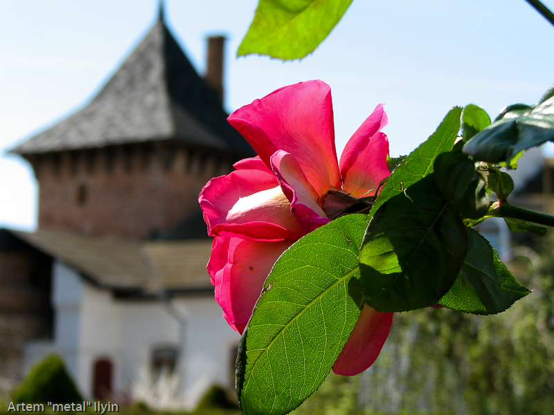 Цветы в Зимненском монастыре, село Зимнее, Волынская область