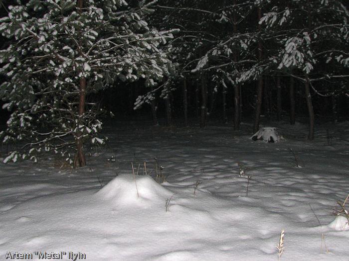 Волынский лес ночью