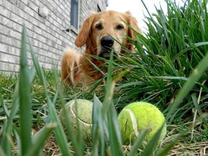 dog + balls