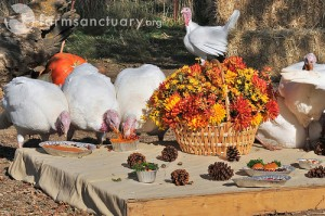 Farm Sanctuary Thanksgiving