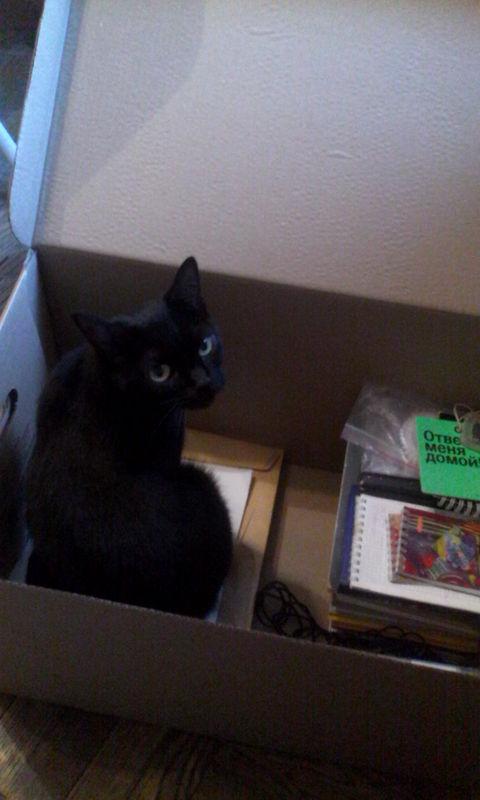 Ещё одна кошка в коробке