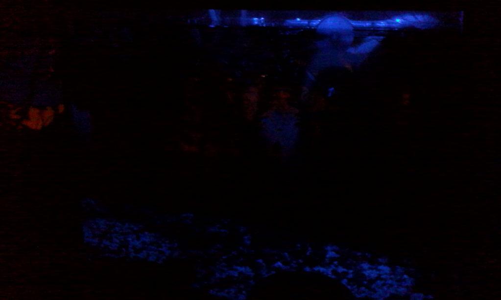 Лунный свет в аквариуме