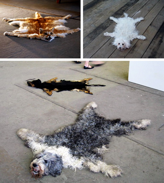 Dog Ate Some Rug: Creative Home Designs: Carpets And Area Rugs Just Imagine
