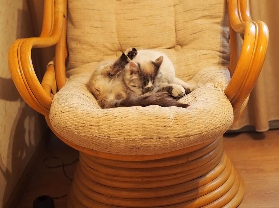 423Как сделать спящего кота