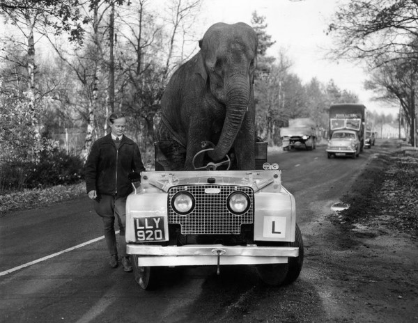 elephant_and_rover