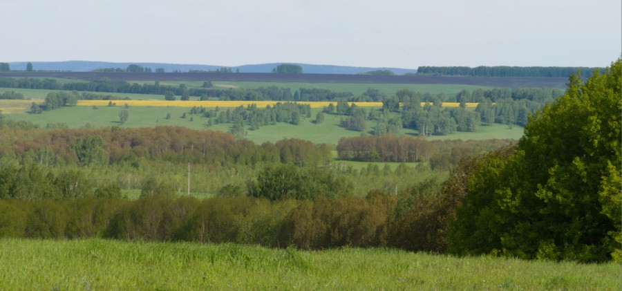 IMG_6866 Panorama F