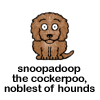 Snoopadoop the cockerpoo