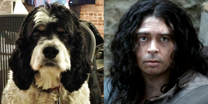 Woody the Dog and Louis XIII, separated at birth?