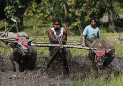 One man, two water buffalo and a big old field full of mud - what more do you want?