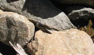 Little snake still eating