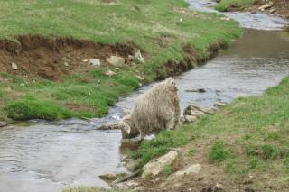 Visited Tintagel Farms 4/11/11