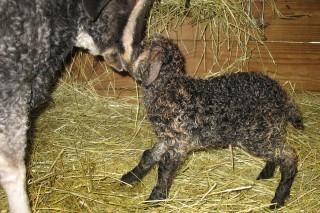 Dahlia kidded a baby girl on 2-11-2012