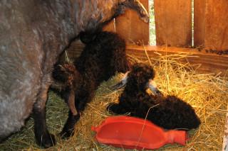 Anna kidded twin boys on 2/12/12
