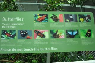 The Rainforest Exhibit had great butterflies
