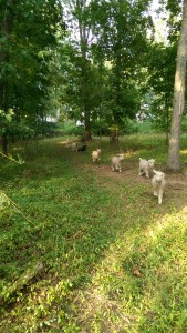 Seven campers trotting on the trail