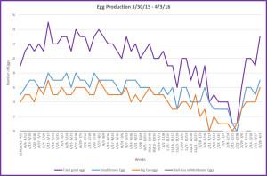 Egg scoresheet graph 2015-2016