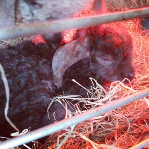 Pansy's daughter Poppy, born 3/16/17