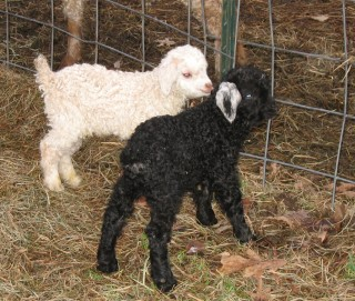 Maggy and Kagan, one week old