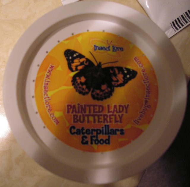 Container top with info about butterflies