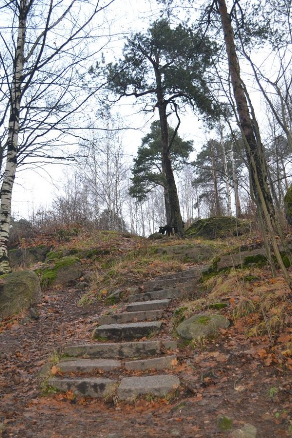ЛестницаПапула2012