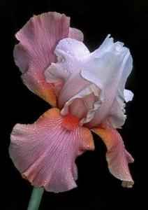 5 flower2