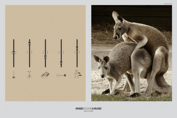 kangaroo_aotw